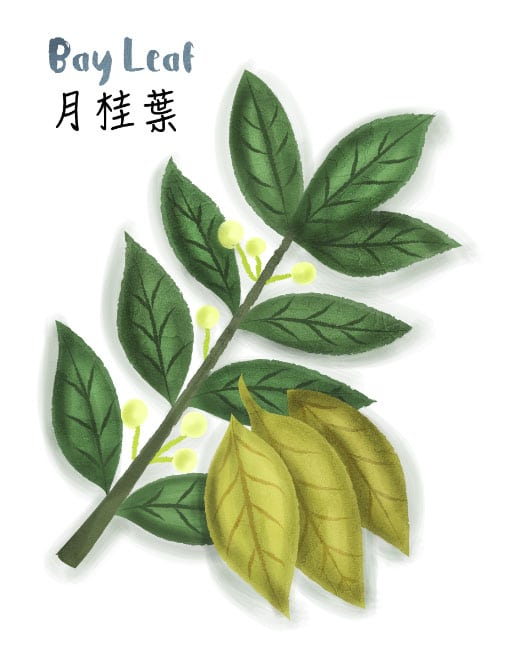 bay leaf illustration