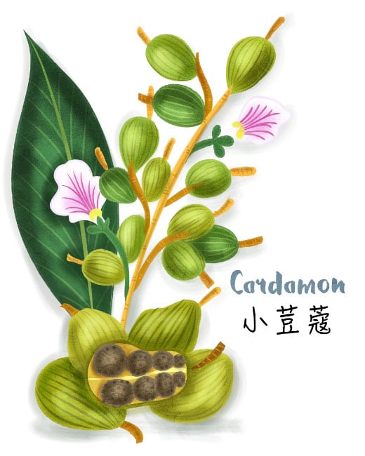 cardamon illustration