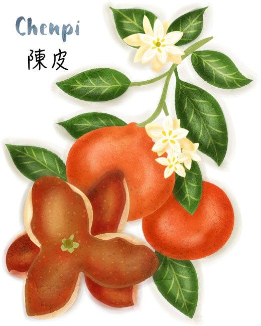 chenpi illustration