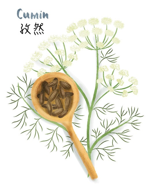 Cumin illustration