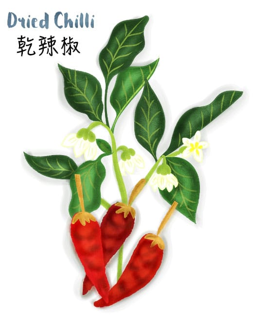 dried chilli illustration