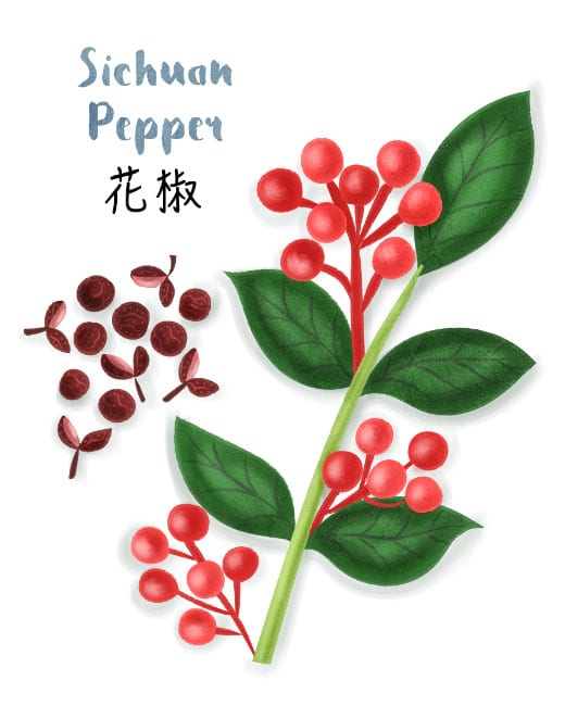 sichuan pepper illustration